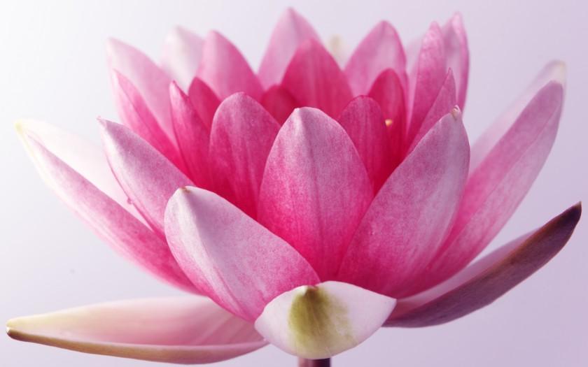 J'ai envie de comprendre... La méditation de pleine conscience
